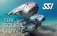 Try-scuba-pool-card